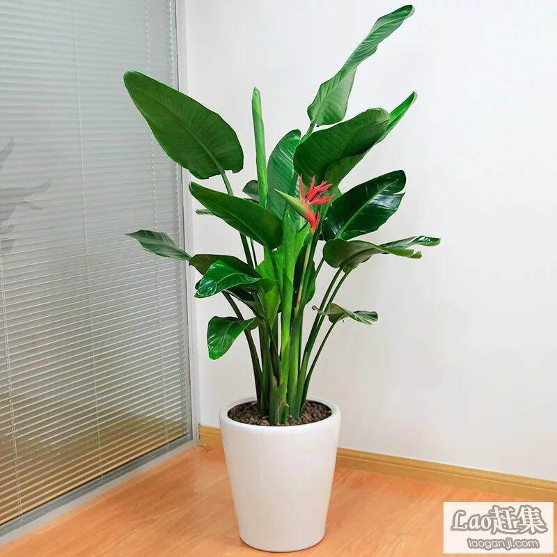 闵行区办公室绿植租摆公司 松江区办公室花卉租赁 嘉定绿化养护